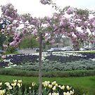 April in Belgrade park by Ana Belaj