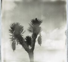 PALM TREE 4 by Nathan Pendlebury