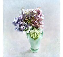 Endless Summer Hydrangea Still Life #2 Photographic Print