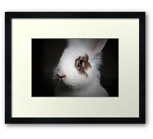 Dwarf Rabbit Framed Print