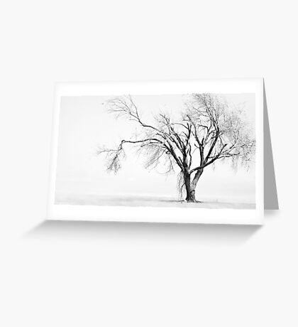 White Willow Tree Greeting Card