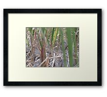Dune Grass Close Up Framed Print