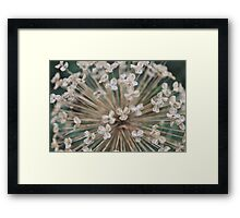 Seeds of Love - JUSTART © Framed Print