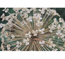 Seeds of Love - JUSTART © Photographic Print