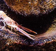 Crustaceans by novopics