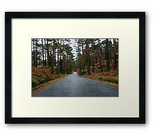 Road through a pine forest Framed Print