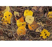 Autumn is Near  Photographic Print