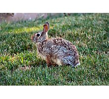 Fluffy Bunny Photographic Print