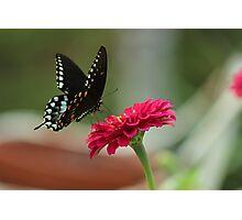 Summer in the garden Photographic Print