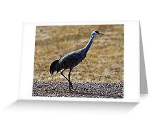 Sandhill Crane Greeting Card