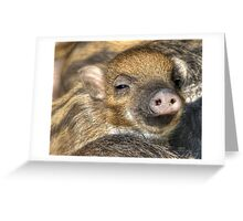 Happy little pig Greeting Card