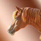 Arabian Portrait by Vikki Shedden Photography