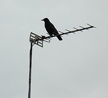 Bird on a Wire by CraftSalad
