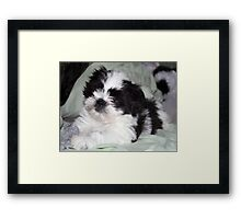 Suzi's  Baby Picture at 7weeks Framed Print