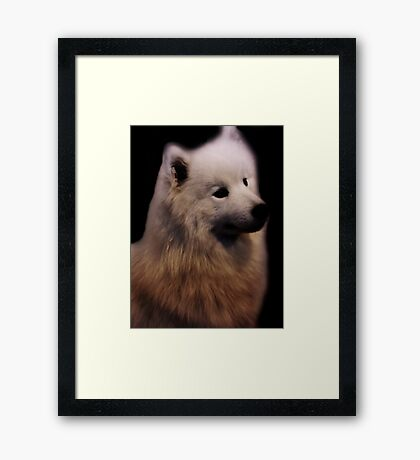 Samoyed Portrait Framed Print