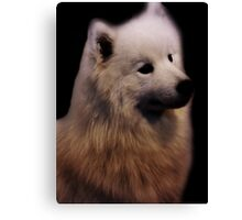Samoyed Portrait Canvas Print