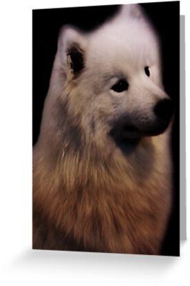 Samoyed Portrait by CreativeEm