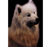 Samoyed Portrait Photographic Print