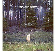 Brand New - Daisy Photographic Print