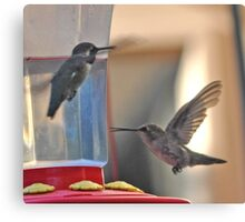 MALE AND FEMALE HUMMINGBIRDS CHATTING Canvas Print
