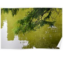 Tree branch leaning over a green lake. Poster