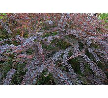 Purple tree branches with leaves pattern. Photographic Print
