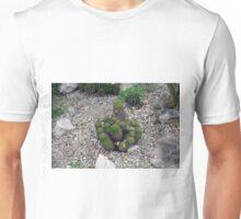 Bunch of cacti on gravel. Unisex T-Shirt