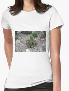 Bunch of cacti on gravel. Womens Fitted T-Shirt