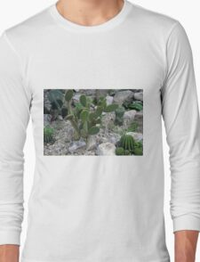 Cacti on gravel. Long Sleeve T-Shirt