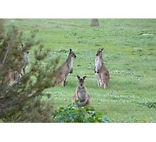 'MORNING POW WOW!' 'Arilka' Mount Pleasant. Adelaide Hills. Photographic Print