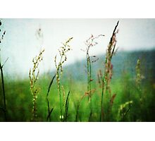 In the Meadow - JUSTART © Photographic Print