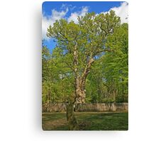 The Knightwood Oak Canvas Print