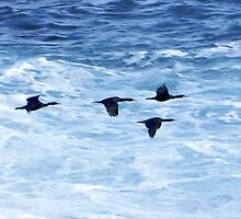 Cormorants  Skimming the Waves off Inishmore by George Row