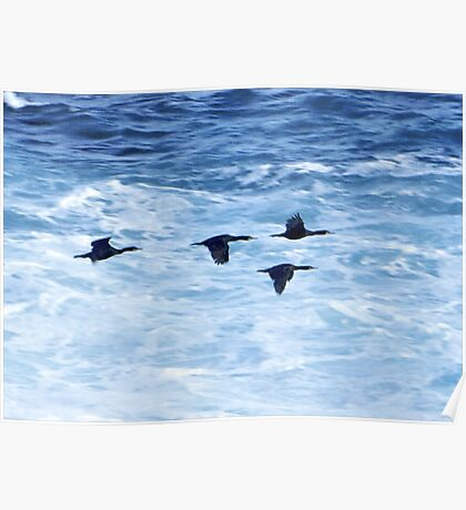 Cormorants  Skimming the Waves off Inishmore Poster