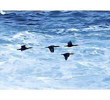 Cormorants  Skimming the Waves off Inishmore Photographic Print