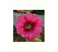 Collection Point Bee Art Print