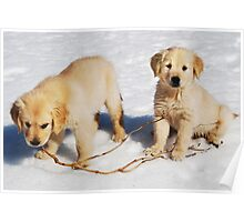"""Golden Retriever Puppies First Winter"" Poster"