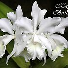 Elegant Orchids ~ For Her Birthday by SummerJade