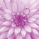 Dahlia Radiant Orchid - JUSTART ©  by JUSTART