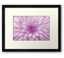 Dahlia Radiant Orchid - JUSTART ©  Framed Print