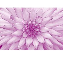 Dahlia Radiant Orchid - JUSTART ©  Photographic Print