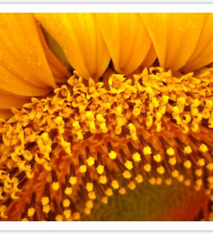 Floral Florets Sticker