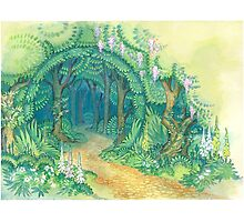 forest gates Photographic Print