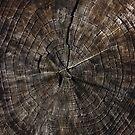 Tree Rings by Alex Boros