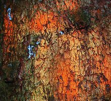 """""""Painted By Palette Knife""""  bark abstract by Laurie Minor"""