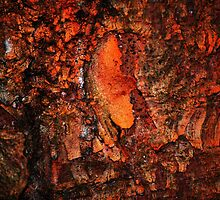 """Red Hot Embers"" abstract on bark by Laurie Minor"