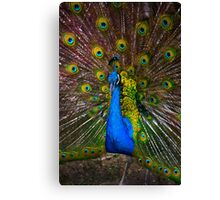 Pumapungo Peacock II Canvas Print