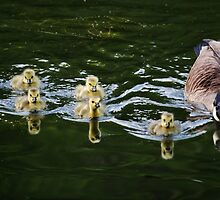 Reflections Upon An Evening Swim by Laurie Minor