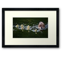 Reflections Upon An Evening Swim Framed Print