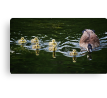 Reflections Upon An Evening Swim Canvas Print